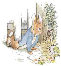 Peter Rabbit !!such a naughty rabbit