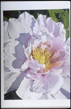 White Peony - Robert J O'Brien