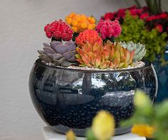 Pick the right container to make a collection of easy-care, low-water cacti and succulents shine!