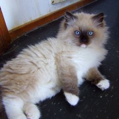 I think I found a cat cuter than Dave & Mia put together @Lauren Fox @Beth Raabe-Howe