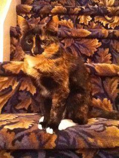 Animals hiding #photographytalk #cats