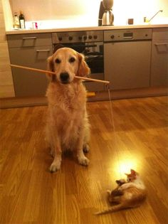 Note to self: get a dog to do the mice-on-a-string-toy duty.