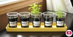 herbgarden1 by kirstenreese, via Flickr & MeettheDubiens