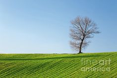 Tree, field and blue sky in autumn at sunset