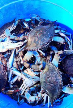 prepped-in-maryland: Maryland Blue Crabs. (via Bloglovin.com )