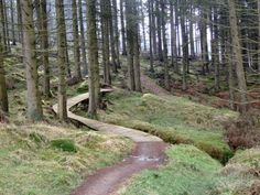 A true haven for keen off-road cyclists, the Kielder Forest has heaps of purpose built trails varying in difficulty and length.