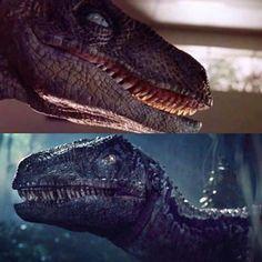 Jurassic Park Raptor, Jurassic Park Trilogy, Jurassic World Raptors, Blue Jurassic World, Jurassic Movies, Jurassic Park 1993, Jurassic World Fallen Kingdom, Prehistoric Creatures, Mythical Creatures