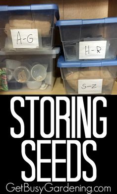 We've all been busy collecting seeds from the garden, now it's time to think about storing them over winter. Here are tips for Storing Seeds | GetBusyGardening.com