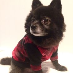 Looking cute in this new black and red plaid hoodie