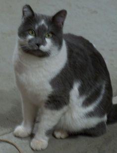 My cat Smokey. Babby, HIghmore, SD. 10/13/12.