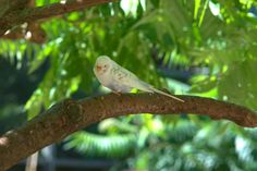 Are you aksing yourself why your budgie is drinking so much water? This article will tell you how much budgies should drink during the day and what might be the problem if your budgie is drinking water excessively! Budgie Food, Parakeet Care, Cages For Sale, Drink Plenty Of Water, Budgies, Parrots, How To Get Warm, Vintage Pictures, Pet Care