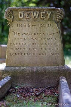 Sweet sentiments on a cat's tombstone Crazy Cat Lady, Crazy Cats, I Love Cats, Cool Cats, Animals And Pets, Cute Animals, Amor Animal, Gatos Cats, Pet Loss