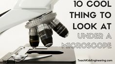 Are you looking for great things to look at under a microscope? Here are 10 amazing things you should view to get started.