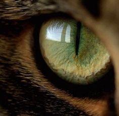 Macro - Eyes