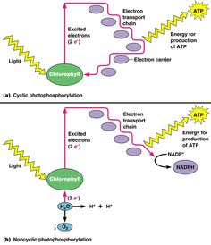 Induced fit modelg biochemistry pinterest active site and photosynthesis fandeluxe Image collections