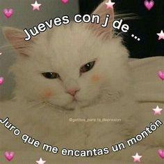 Memes Amor, Bts Memes, Funny Memes, Romantic Memes, Memes Lindos, Ex Amor, Frases Love, Cute Love Memes, Anime Best Friends