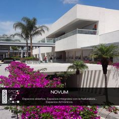 Plaza Novum. Vista acceso principal / bugambilias / pérgolas / concreto blanco martelinado / puentes estructura metálica / barandales cristal. Código Z Arquitectos.