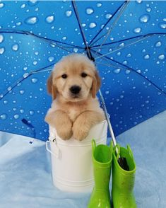 Winter and rainy days are coming!