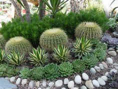 These linear plantings of agave and cacti are aligned perpendicular to the  slope to check the speed of runoff.
