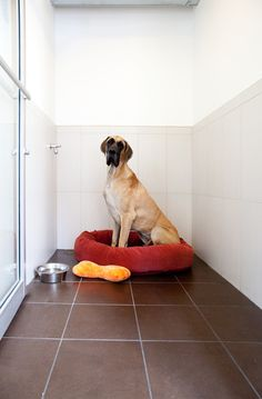 Heated floors create a luxury experience in pet resorts