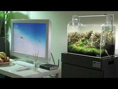 ADA Mini M & Aqua Sky 2 - NAacademy.pl - YouTube