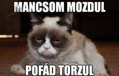Grumpy cat jokes, grumpy cat funny, funny grumpy cat …For more hilarious humor… Grumpy Cat Quotes, Grumpy Cat Meme, Cat Jokes, Funny Cat Memes, Funny Cats, Funny Animals, Funniest Animals, Hilarious Jokes, Gato Grumpy