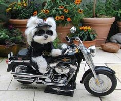 Biker Animals – 24 Pics