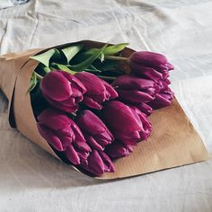 flowers, tulips, and purple Bild