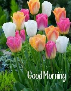 good morning quotes for him . good morning wishes . Good Morning Beautiful Pictures, Latest Good Morning Images, Good Morning Picture, Good Morning Messages, Good Morning Greetings, Good Morning Good Night, Morning Pictures, Good Morning Wishes, Sunday Wishes