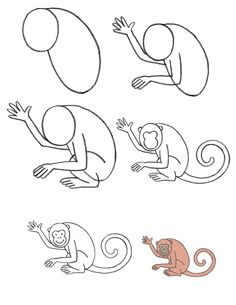 How To Draw Spider Monkeys