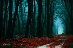 "the Leading path - <a href=""https://www.facebook.com/LarsvandeGoor"">FOLLOW ME ON FACEBOOK</a> <a href=""http://larsvandegoor.com/seebook/"">FREE SeeBOOK</a> <a href=""http://larsvandegoor.com/"">WEBSITE</a> <a href=""https://instagram.com/larsvandegoor/"">Follow me on Instagram</a>"