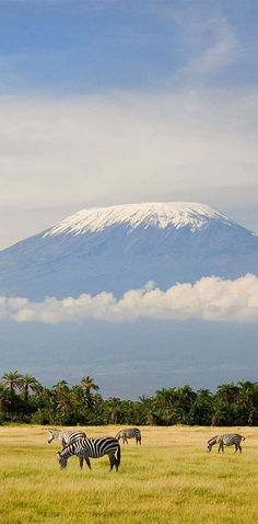 Mount Kilimanjaro, T