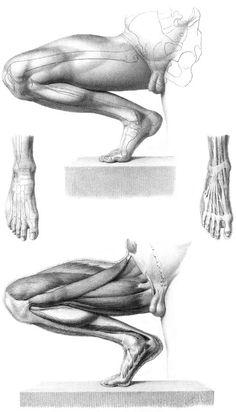 Músculos brazos 6