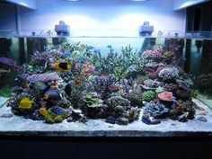 All sps tanks - Page 5 - Reef Central Online Community