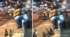 Everyone passed bythis busker. But agroup offour little kittens made his day...
