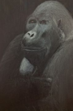 June Kosloff is originally from Jamaica, Queens and resides in Manhattan. She holds a BALA in Social Science and Visual Arts from SUNY Purchase.  I paint animals, and it began with primates. My work is about the relationships we have with the animals we live with. Fragility and resiliency and are explored.