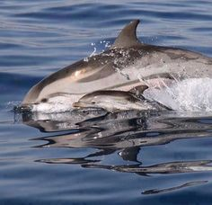 #Baby #dolphin