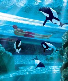 The Dolphin Plunge, Aquatica water park, Orlando, Florida