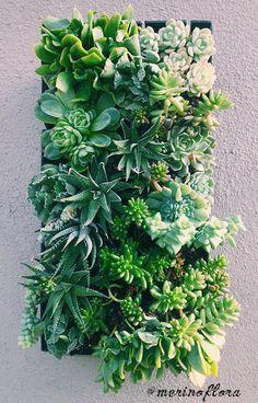 Succulent Vertical Garden, by Merino Flora
