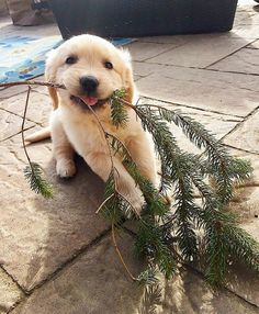 Junior branch manager