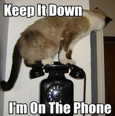 i'm on the phone!