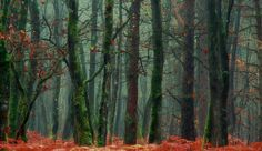 In the forest! by Patrice Thomas - Photo 173641417 / 500px