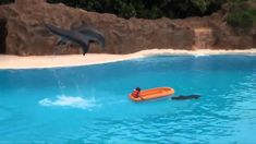 Dolphins at their best.