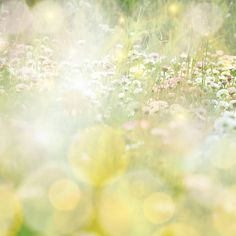 daisy field colorful sun light background
