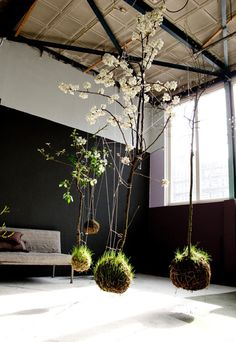 Hanging plants in the front porch or from pergola.  Maybe several ferns in the shady spots of the pergola.