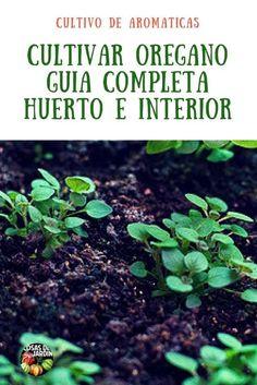 Complete guide to oregano cultivation – Garden Stuff - Modern Eco Garden, Dream Garden, Garden Plants, Como Plantar Oregano, Fruit Trees, Trees To Plant, Organic Gardening, Gardening Tips, Farm Lifestyle