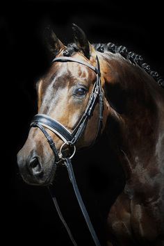 Paarden - Welkom bij EB Fotografie