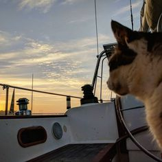 Keeping a watchful eye on our friends as they depart for a 3 day training sail ⛵ ☀️    . . . . . . . #sailingcat #catsofinstagram #boatcat #sailing #sunrise #sky #cloud #boatlife #cat #boat #yacht #sonne #katz #katzen #chat #貓 #catlife