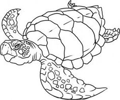 how to draw a sea turtle step 5 art with turtles pinterest