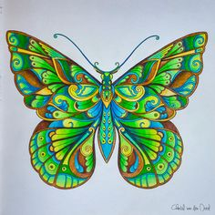 Take a peek at this great artwork on Johanna Basford's Colouring Gallery! Butterfly Drawing, Butterfly Fairy, Butterfly Painting, Butterfly Wallpaper, Coloring Books, Coloring Pages, Adult Coloring, Johanna Basford Coloring Book, Polychromos